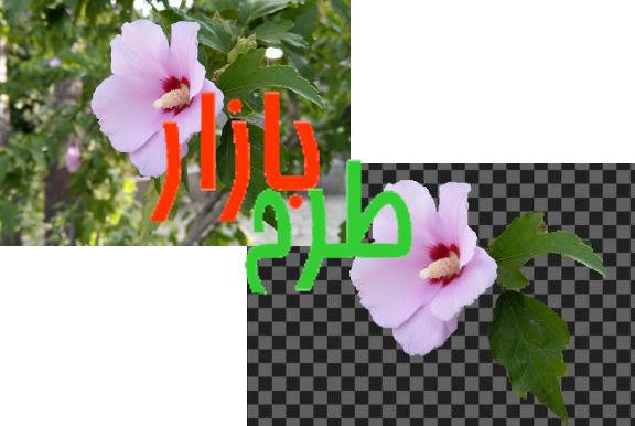 طرح دوربری شده گل ختمی صورتی