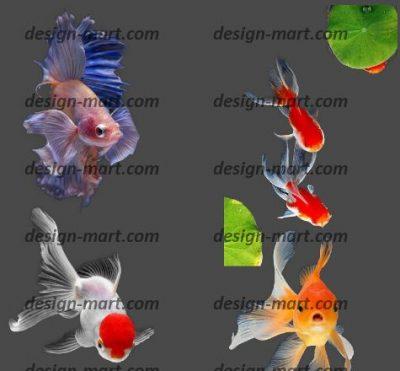 طرح دوربری ماهی قرمز