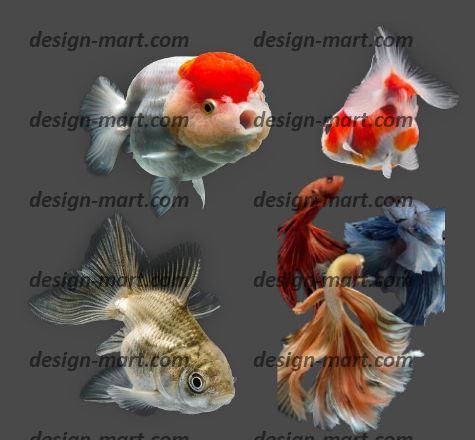 ۱۶ طرح دوربری شده ماهی قرمز و زینتی برای عید سال نو